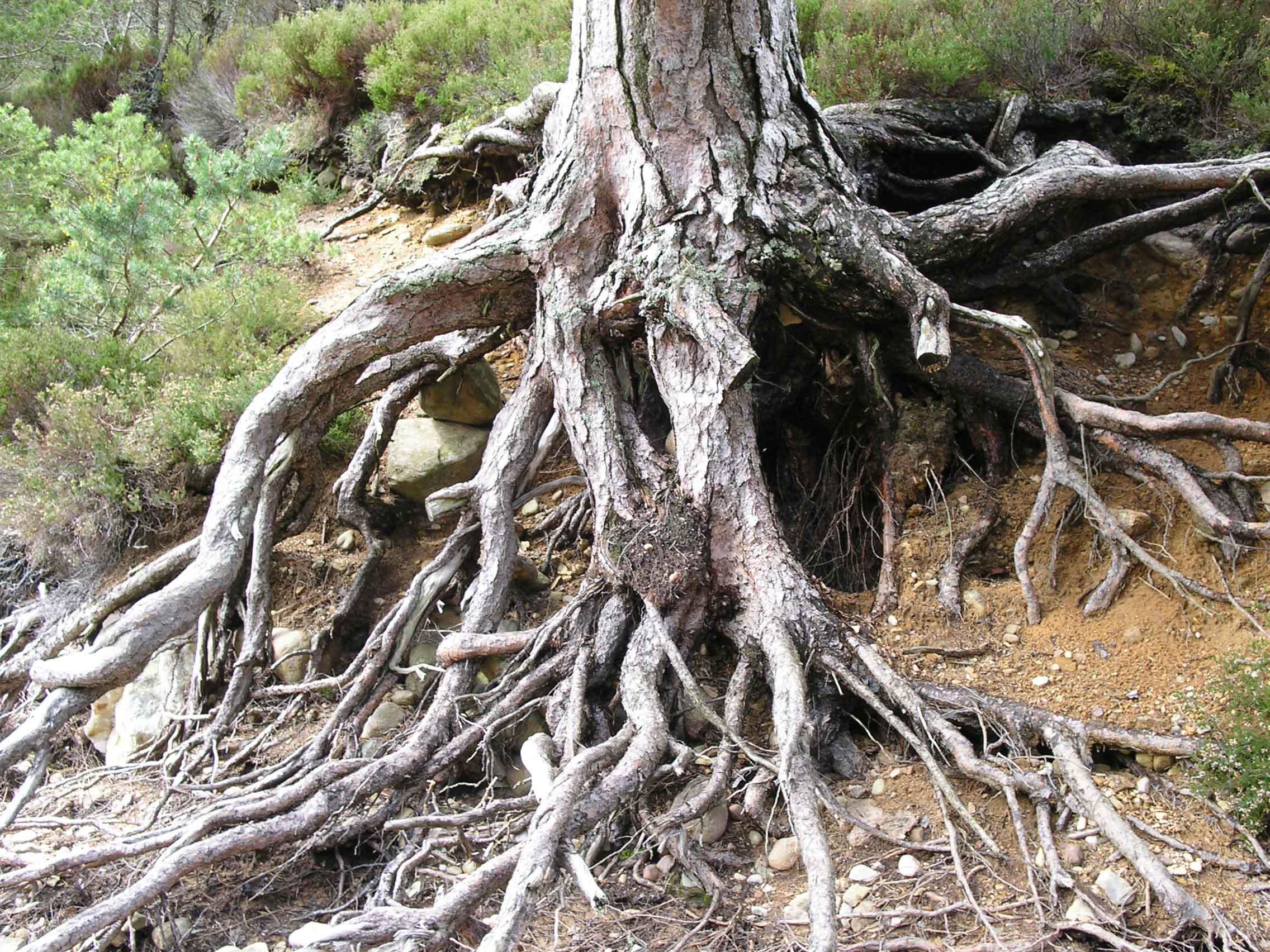 Человек без веры - дерево без корней.