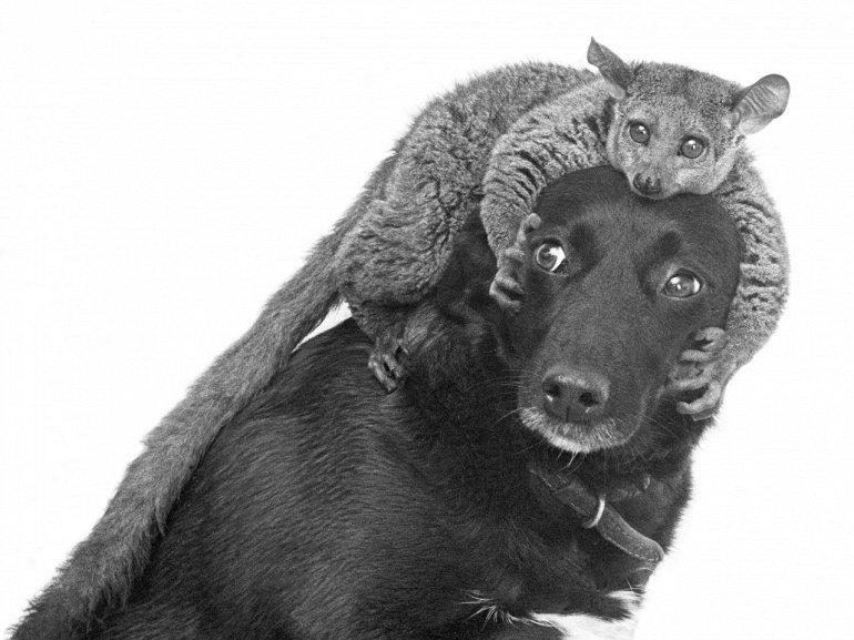 приемные семьи животных фото спустя какое-то время